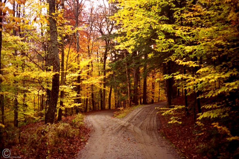 two-roads-yellow_woods-1a.jpg